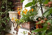Orange violas planted in terracotta window box and antique Greek-style stone bracket mounted on brick façade