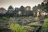 Rows of beds of autumn perennials and groups of trees in plant nursery in morning light
