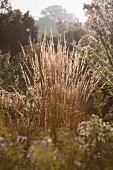 Autumnal grasses in sunshine in rural surroundings