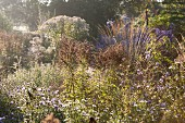 Various perennial plants in hazy autumn sunshine