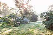 Lichtung zwischen Gehölzen in dunstiger morgendlicher Herbstsonne