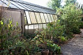 Plant pots, perennials and shrubs next to greenhouse in nursery