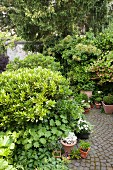 Shady garden with various bushes and corydalis and path paved in fantail pattern
