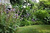 Flowering corydalis, white peonies and roses in well-tended garden