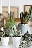 Cacti in white and grey pots