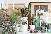 Variety of cacti and succulents and white candles in candlesticks