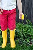 Kind mit roter Hose und gelben Gummistiefeln, neben gelber Tulpe (Sorte: 'West Point')