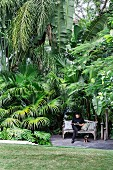 Idyllic seat, man on wooden bench, under large palm trees in a tropical garden