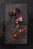 Dried everlasting flowers on rusty panels