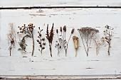 Verschiedene getrocknete Samenstände von Pflanzen auf Holzuntergrund