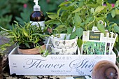 Potted herbs in decorative pots in white-painted crate with lettering