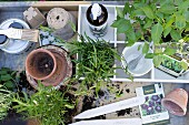 White-painted wooden crate, potted herbs and gardening utensils