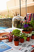 Vorbereitung für einen Mini-Garten unter der Glasglocke