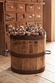 Dried opium poppy heads in old wooden barrel in front of old apothecary cabinet