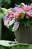 Lupins of various colours in basket