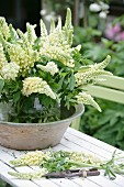Glass vase of white lupins in ceramic bowl on white wooden table