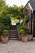 Old house with brick and wood façade, flight of steps, plants in terracotta pots and box balls