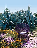 Violet armchair in front of agaves outdoors