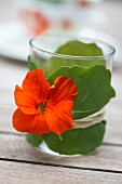Tealight holder made of glass wrapped with nasturtium leaves and flower