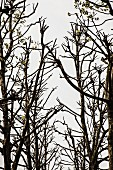 Bare tree branches against cloudy sky
