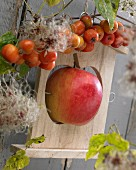 Bird feeder with apple