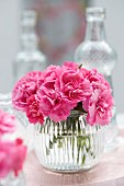 Dianthus in glass vase