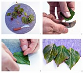 Making place mats from felt and ivy leaves