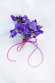 Posy of sweet violets tied with ribbon