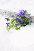 Sweet violet flowers and leaves on table next to stone slab