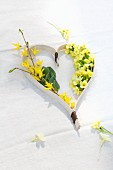 Arrangement of spring flowers; forsythia and cowslips in ornamental, chip wood heart