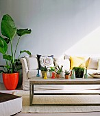 Succulents on a rustic, modern coffee table, in the background a houseplant in a red flowerpot next to an upholstered sofa