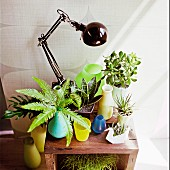 Colorful vases with green plants on wooden shelf