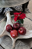 Antler used as bowl for dark red Christmas apples and poinsettia on tin tray