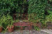 Drei antike Metallstühle als nostalgische Gartendekoration vor begrünter Gartenmauer