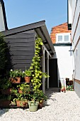 Potted plants on gravel floor against end of wooden outbuilding