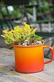 Yellow-flowering plant and succulent in vintage, orange enamel mug