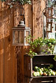 Lantern hanging on wooden wall above harvested apples in wooden crates