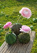 Pink ranunculus stuck in balls of herbs on weathered wooden board outdoors