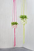 Plant hangers hand-crafted from pots and neon wool