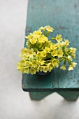 Posy of cowslips on old stool