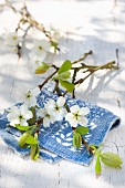 Branch of damson blossom on white and blue patterned cloth on wooden table outdoors