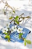 Zweig mit Zwetschgenblüten auf weiss blau gemustertem Tuch auf Holztisch im Freien