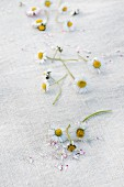 Daisies, some with plucked petals, scattered on white linen cloth