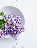 Sprigs of lilac in a bowl viewed from above