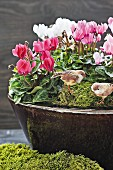 Cyclamen, moss and bird figurines in ceramic bowl