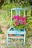 Pink potted geranium on blue wooden chair in garden
