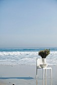 Branched in vase on white outdoor chair on beach
