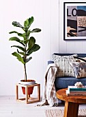House plant in hand-crafted wooden frame next to sofa against white wood-clad wall