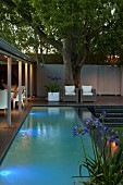 Camphor tree and pool with underwater lighting next to roofed terrace
