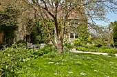 Lawn and trees in garden of old, English country house